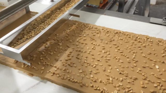 Spreading Peanuts on Snack Food Conveyor using Vibratory Feeder